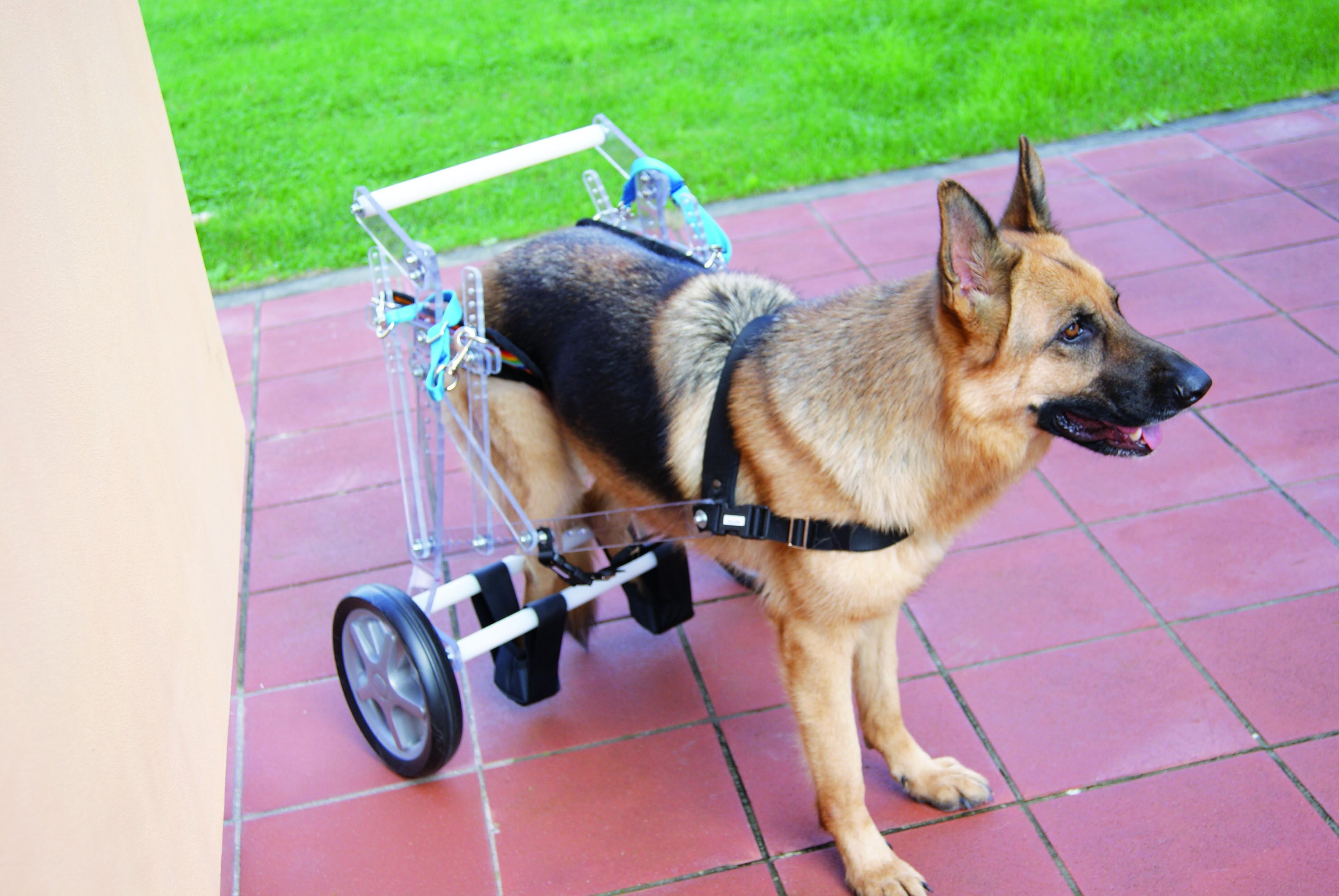 carrellino-paraplegico-base